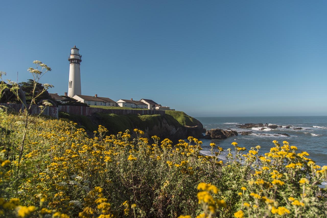 Ein Meer an gelben Blumen, ein Leuchtturm im Hintergrund.